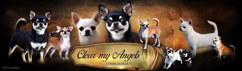 Clear My Angels